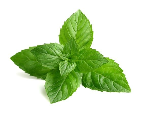 Mint Leaves(Fresh without root)